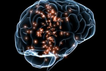 10 Interesting Facts About Brain Structure Functions
